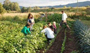 Family and Friends Help Pick Beans at Red Truck Farm on Sauvie Island. Photographs courtesy of Kristine Karnezis