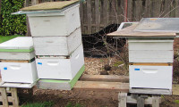 Beekeeping Basics: Equipment For Beginners -video