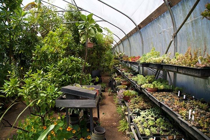 Succulents and Citrus-Kinship Garden Greenhouse