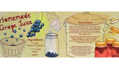 Homemade Grape Juice Recipe and Illustration - Rebecca Gerendasy